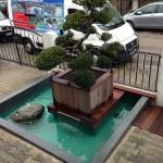 Eingang mit Bonsai